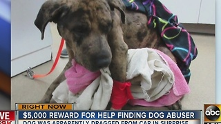 Dog dragged in Surprise, no arrest made
