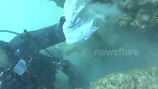 Australian diver frees octopus from plastic bag - Video