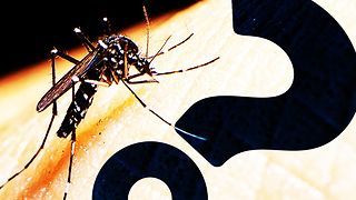 HowStuffWorks NOW: Mosquito Factories Fight Zika With GMOsquitos | HowStuffWorks NOW