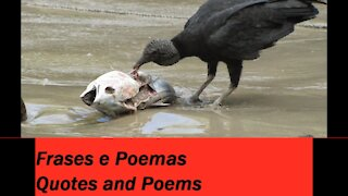 You're like a vulture: Is ugly, and disgusting! [Quotes and Poems]