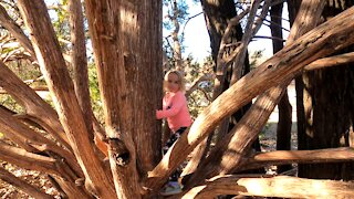 Carly Kid Tree Climbing ~ Just like Old Timers Did