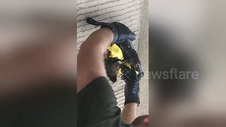 Man narrates bird rescue he witnessed - Video