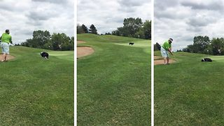 Hilarious moment strange dog chases down pitch shot before returning golf ball to player - Video