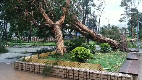 Typhoon Winds Knock Over Trees, Block Roads in Sai Kung