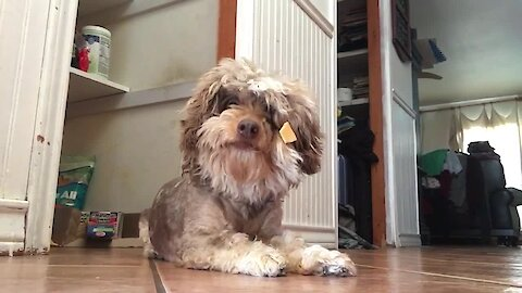 Silly Dog Gets Treat Stuck On Her Face
