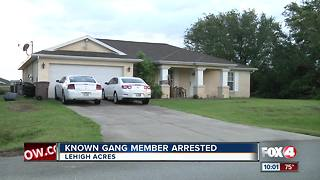 Known Gang Member Arrested in Lehigh Acres - Video