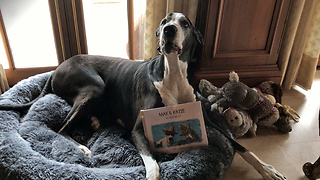 Talkative Great Dane is proud of her new book - Video