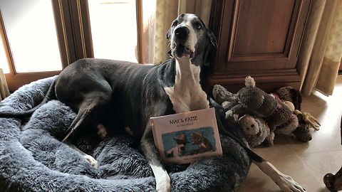 Talkative Great Dane is proud of her new book