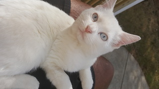 Casper the cat learns how to stand - Video