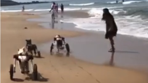 Shelter Dogs in Wheelchairs Have a Blast on the Beach