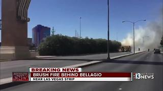 Fire in trees near Las Vegas Strip - Video