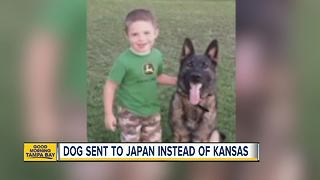 United Airlines mistakenly sends dog to Japan instead of Kansas City - Video