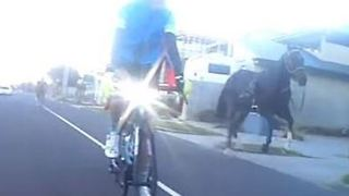 Escaped Horses Chase Cyclists Along Melbourne Highway - Video