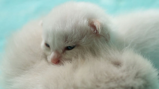 Children Save Four Abandoned, Newborn Kittens Discovered in The Bushes - Video