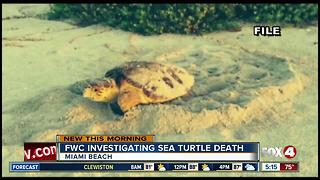 Sea turtle found dead after nesting on Florida beach - Video