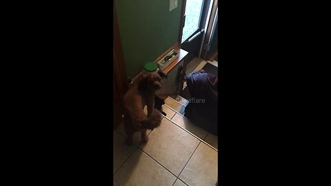 Hungry dog demands treats as he continuously hits the jar