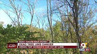 Beware danger from dead tree limbs - Video