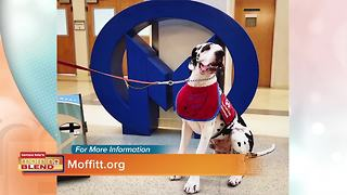 Pet Therapy - Video
