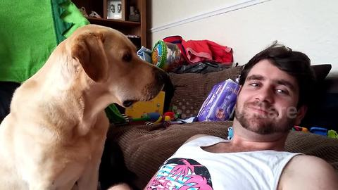 Jealous Labrador Wants To Be The Center Of Attention