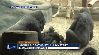 Gorilla deaths at Milwaukee County Zoo remain a mystery - Video