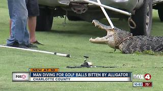 Gator bites diver on Charlotte County golf course - Video
