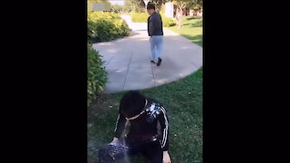 Funny Prank compilation