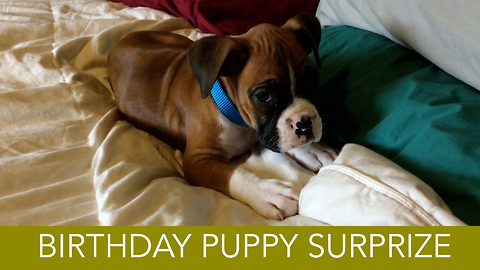 Man surprises wife with puppy for early birthday present