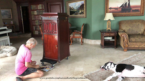 Great Danes Relax and Watch Rainstorm and Antique Restoration