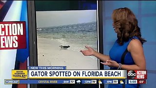 Alligator seen relaxing in surf on Florida beach