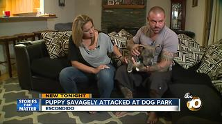 Puppy savagely attacked at dog park - Video