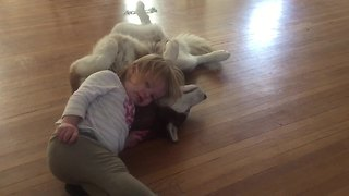 Toddler absolutely adores her Husky - Video