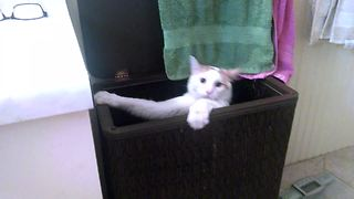 Hilarious Cat Jumps Into Laundry Basket - Video
