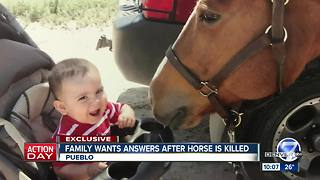 $5k reward offered after Pueblo family's horse found dismembered