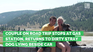 Couple on Road Trip Stops at Gas Station, Returns to Dirty Stray Dog Lying Beside Car - Video