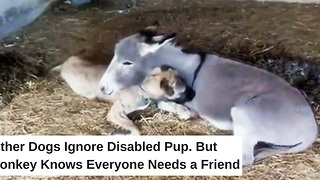 Other Dogs Ignore Disabled Pup. But Donkey Knows Everyone Needs a Friend