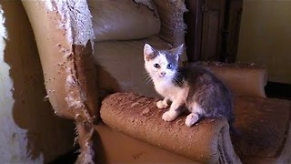 Team Rescues Over 40 Cats And Kittens From A Hoarding House - Video