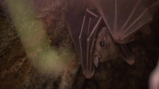 What to know when it comes to bats and contracting rabies