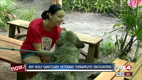 Veterans interact with wolf dogs in therapeutic encounter