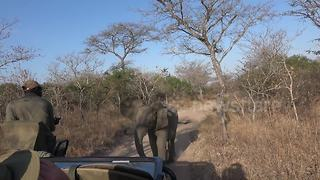 Watch an adorable young elephant try to take on a safari vehicle - Video