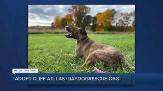 Pet of the Week: Meet Cliff