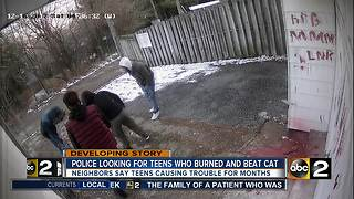 Police looking for teens who burned and beat cat - Video