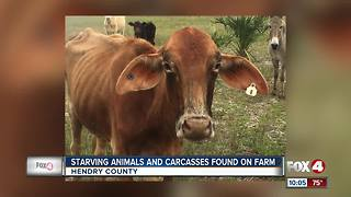 Man facing dozens of charges of animal abuse