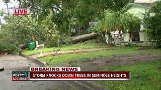 Storm knocks down trees in Seminole Heights 6pm