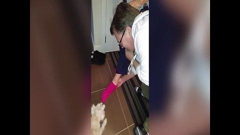 Dog shows Grandma a Crazy Trick with Socks