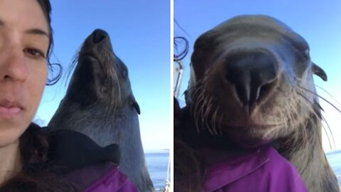 Wild seal jumps on boat to smile for the camera