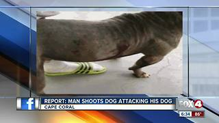 Report: Man shoots dog attacking his dog - Video