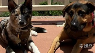 Shelter dogs being trained to help veterans in West Palm Beach