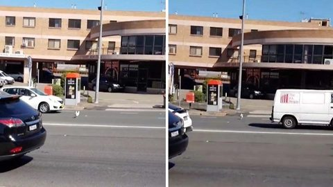 Why did the chicken cross the road? Hilarious footage shows chicken sprinting across road