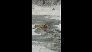 Firefighter helps adorable dog who fell in frozen Whitefish River