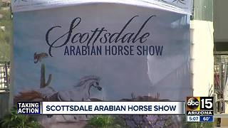 What to see at the Scottsdale Arabian Horse Show - Video